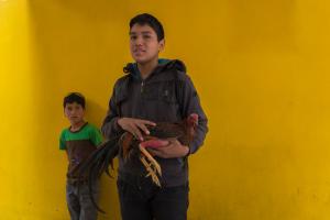 RuthMontielArias, fotografia, artista, artist, gallos