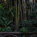 RuthMontielArias, fotografia, artista, artist, zoo