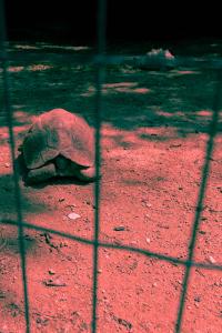 RuthMontielArias, artista, artist, animales, zoo